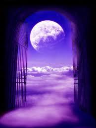 Gratia violet